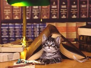 livro e gato