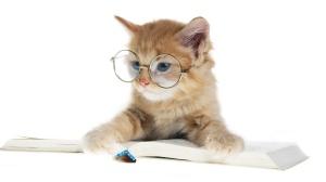 gato óculos 1