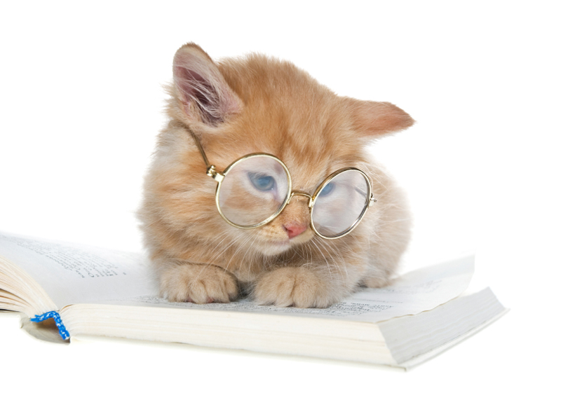 Cats Reading Gifs
