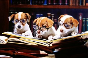 dogs and books 1